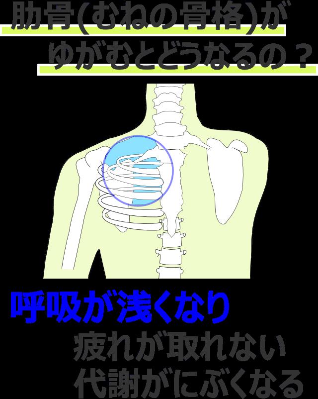 肋骨(胸の骨格)がゆがむとどうなるの?