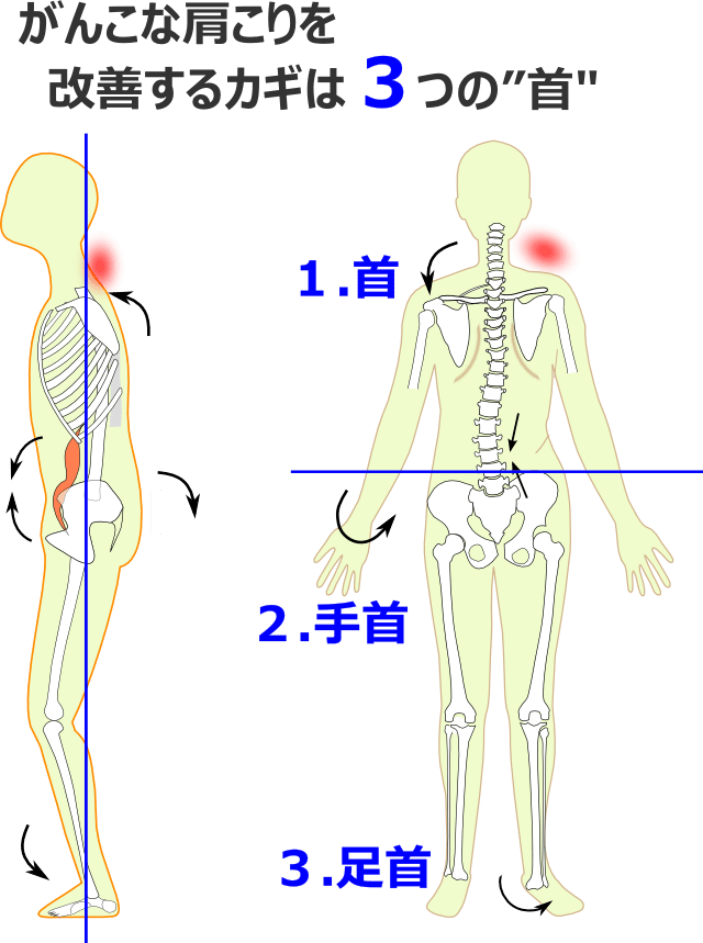 がんこな肩こりを改善するカギは3つの首