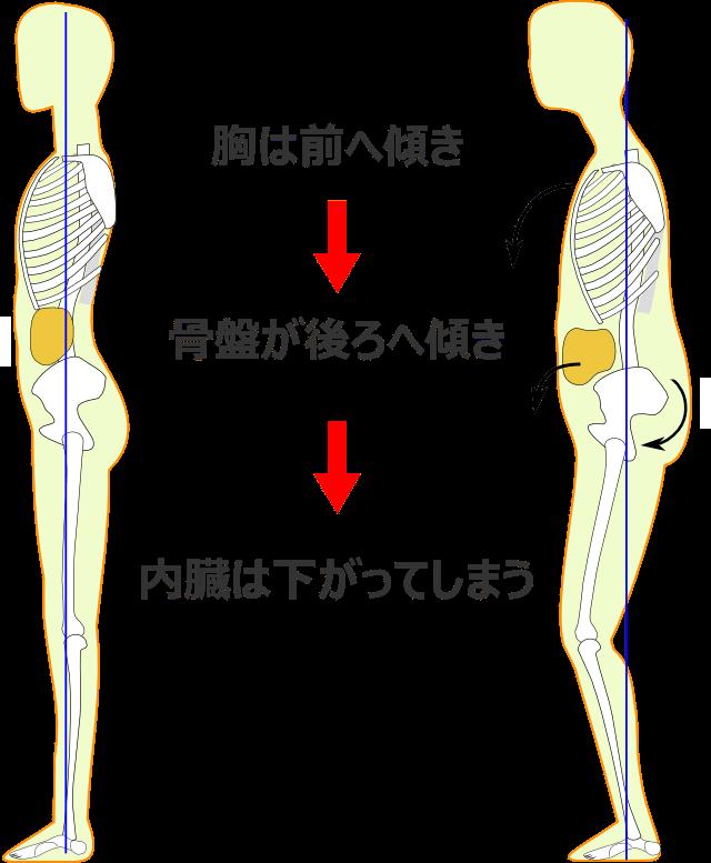 体のゆがみの過程3